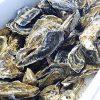 【おびゴハン】牡蠣の焼きそばのレシピ!マロン!【12月12日】