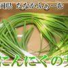 【ノンストップ】にんにくの芽のつくねのレシピ!三ツ星シュフの食なび!ESSE!【5月10日】